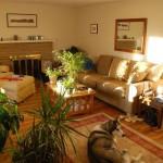 Домашние растения: чем украсить свой дом