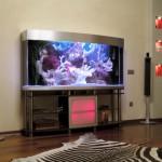Аквариум – изюминка домашнего уюта