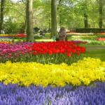 Сочетания цветов в саду
