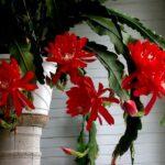 6 самых неприхотливых комнатных растений: фото, названия